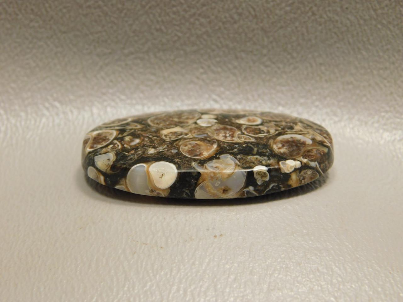Turritella Agate 40 mm by 24 mm Oval Gemstone Fossil Cabochon #15