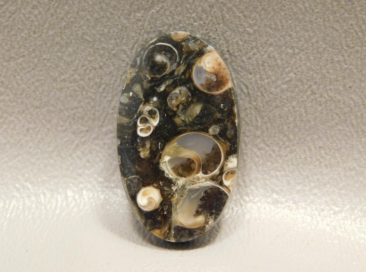 Turritella Agate Jewelry Stone Cabochon Fossil #17