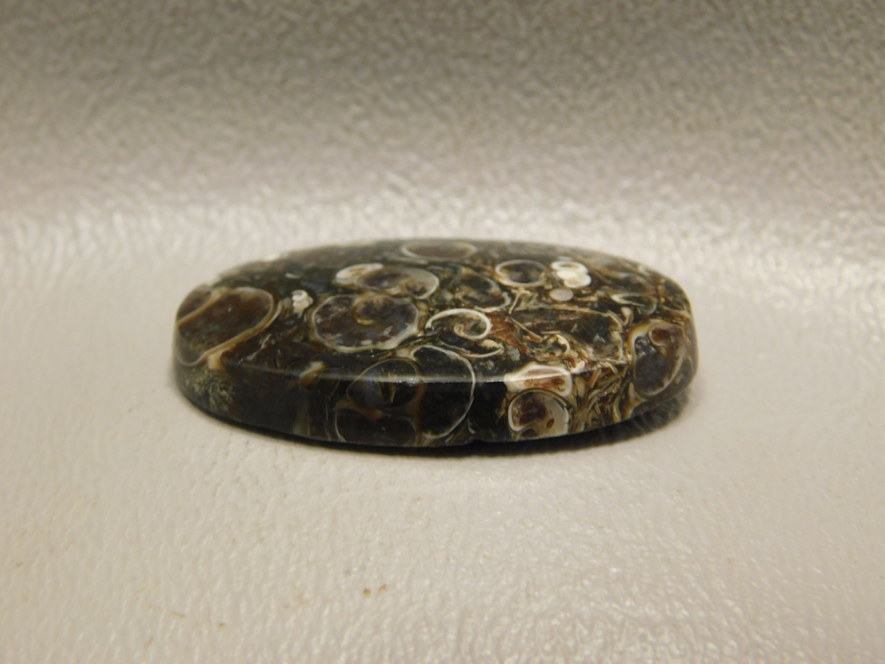 Turritella Agate Semiprecious Gemstone Fossil Cabochon #19
