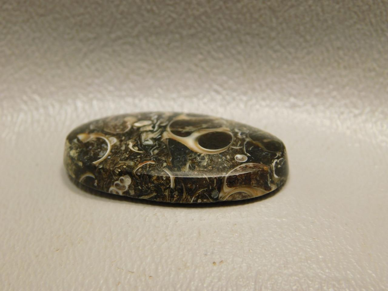Turritella Agate Loose Stone Fossilized Cabochon #20