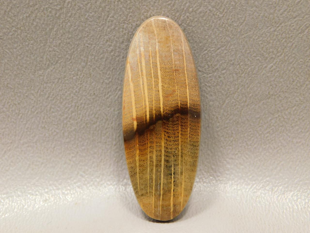 Fossilized Golden Oak Wood Cabochon Semi Precious Stone #15