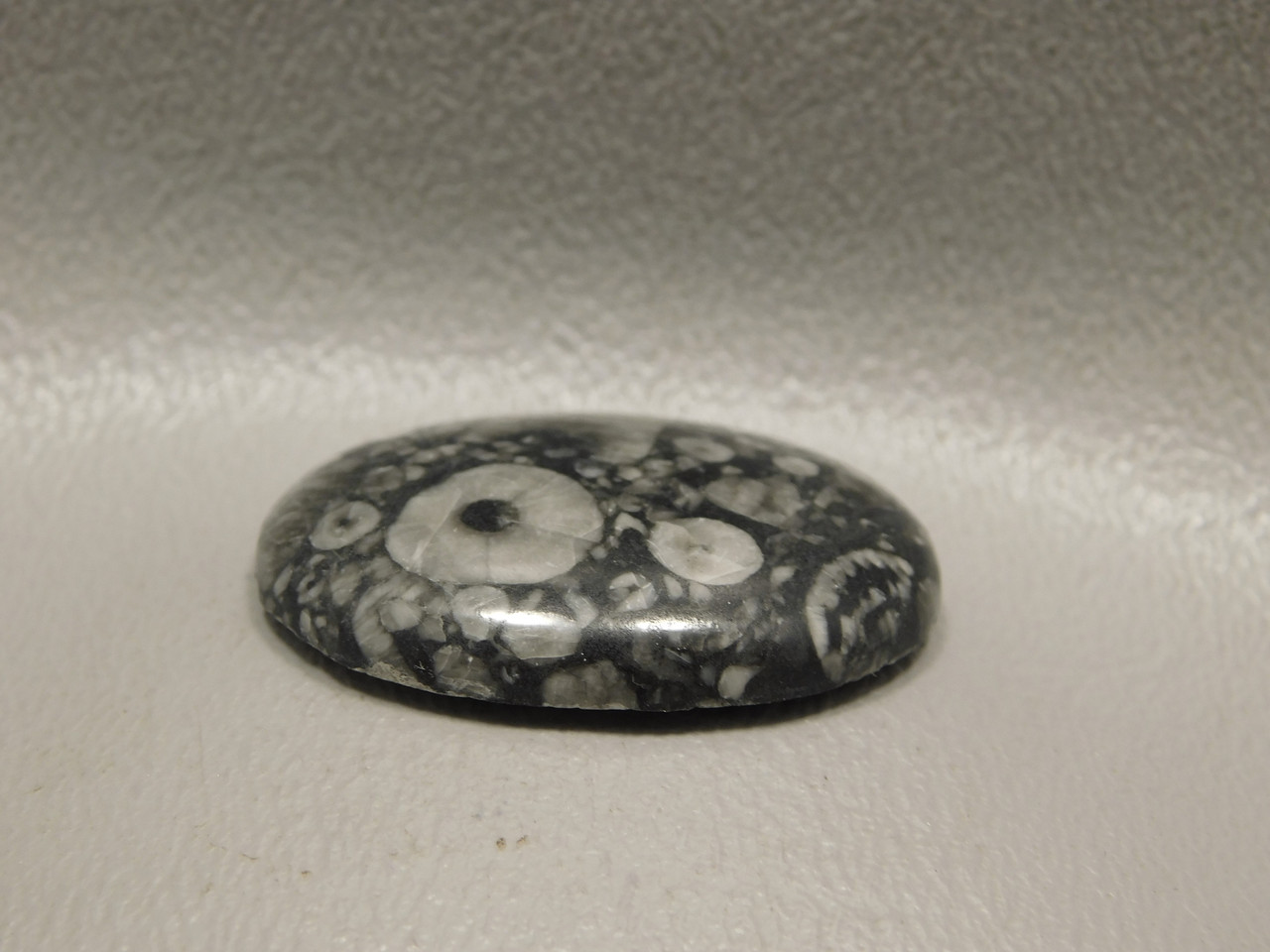 Crinoid Marble Fossilized Stone Cabochon #18