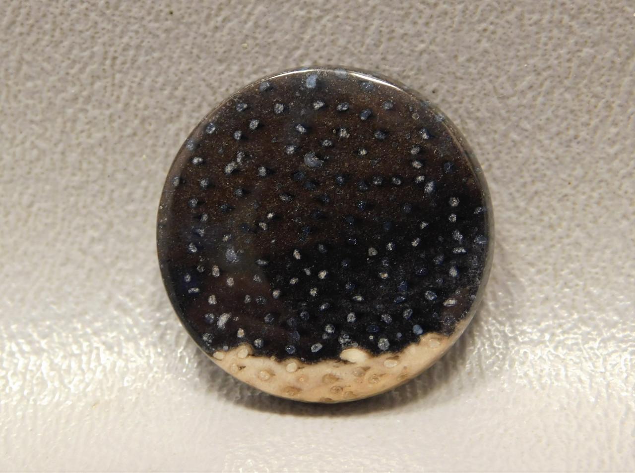 Petrified Palm Wood Stone Cabochon 24 mm Round Loose Stone #21