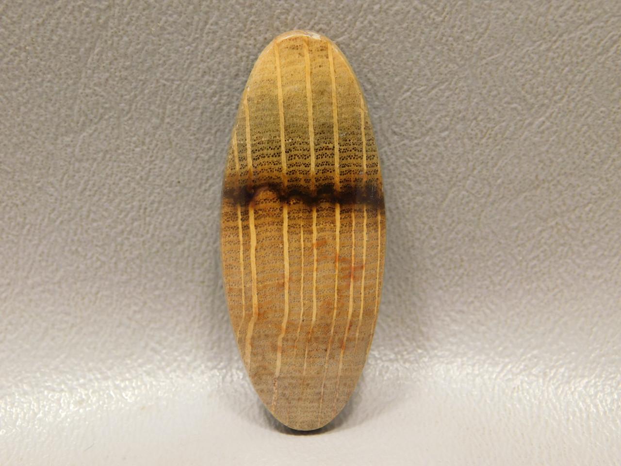 Petrified Wood Golden Oak Cabochon Jewelry Stone #20