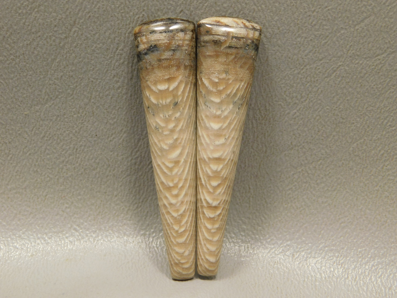 Petrified Sycamore Wood Matched Pair Long Drops Cabochons #14