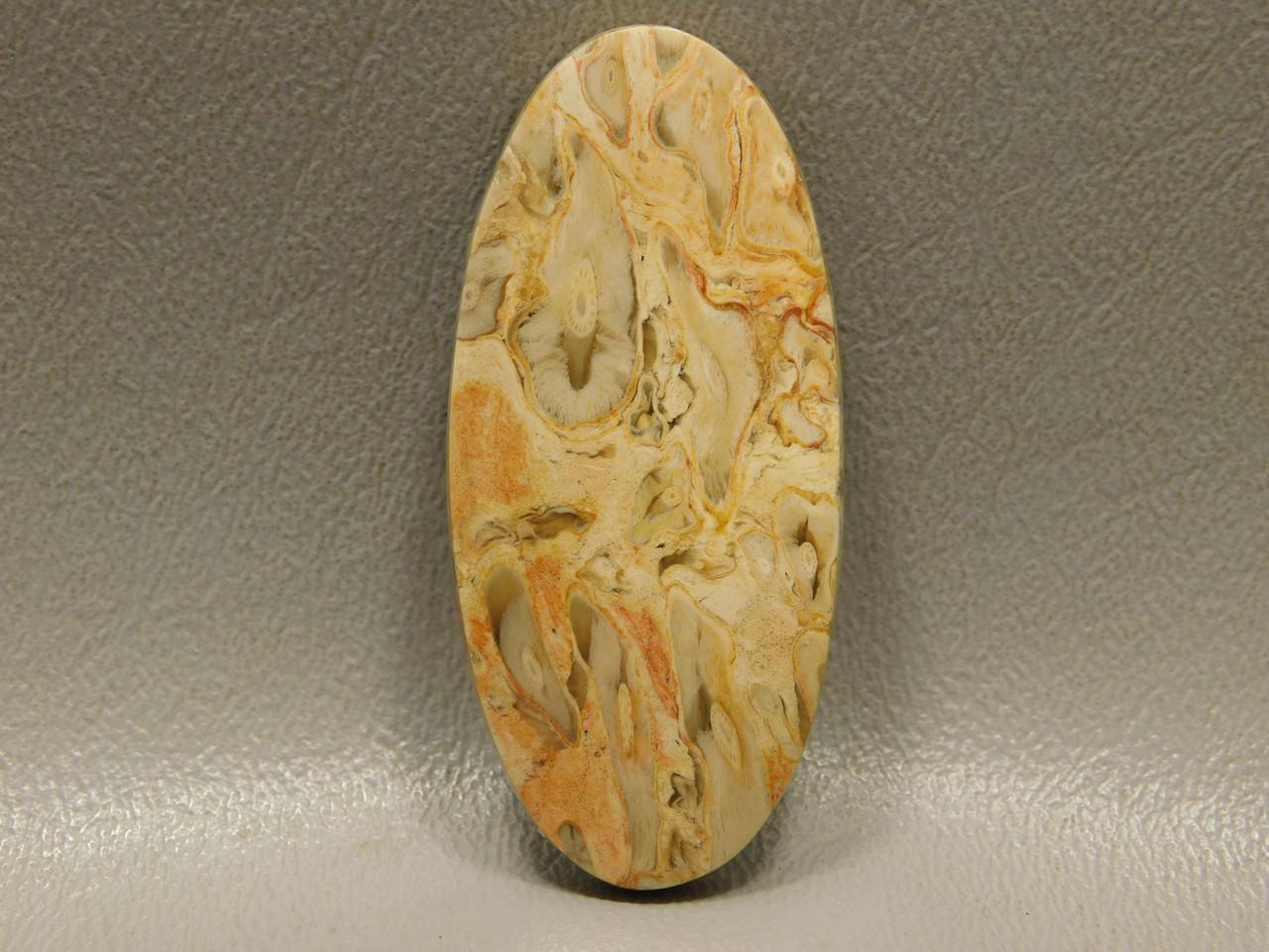 Petrified Palm Wood Fossilized Cabochon Stone Indonesia #10