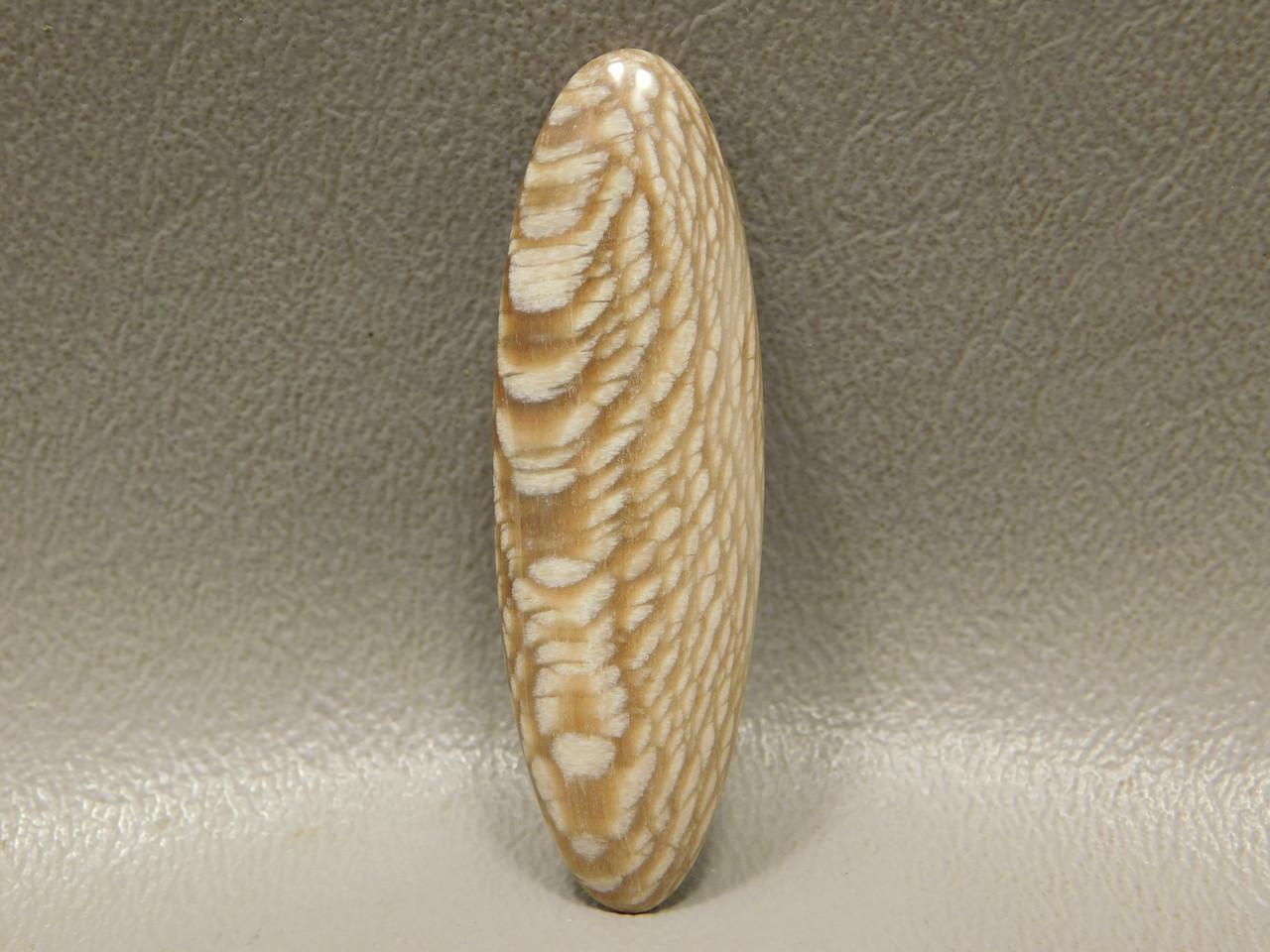 Petrified Sycamore Wood Cabochon Stone Petrified Sycamore Wood Cabochon Badger Pocket Fossil #12