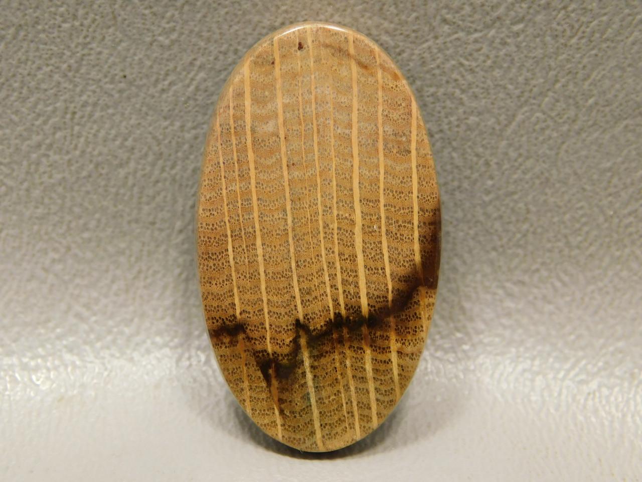 Petrified Wood Cabochon Oval Stone Jewelry Making Supplies #22