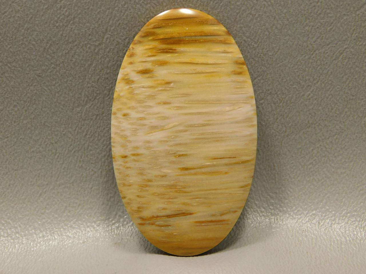Petrified Palm Wood Large Oval Straw Pattern Cabochon Gemstone #14