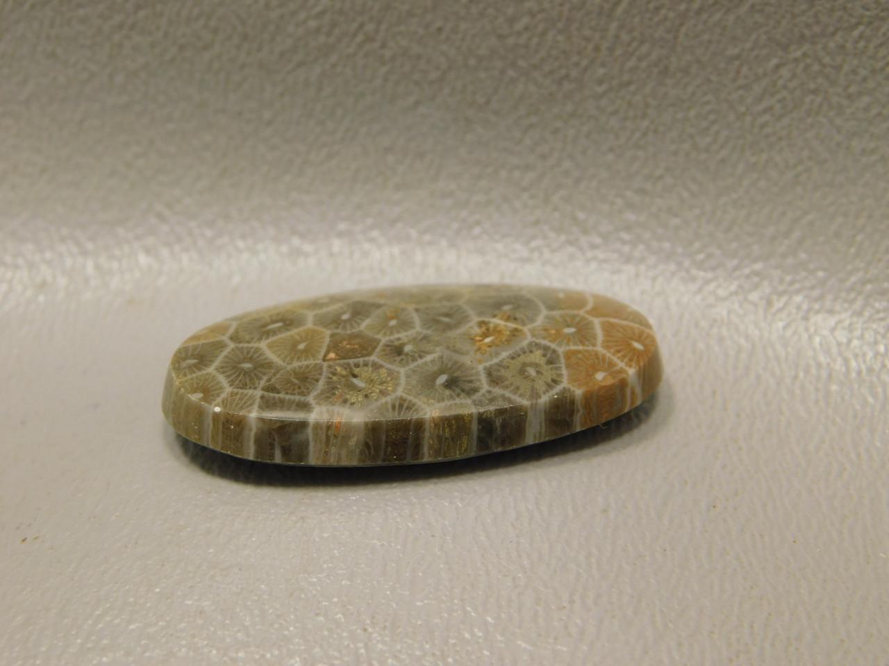 Fossil Coral Semiprecious Stone Cabochon #F1