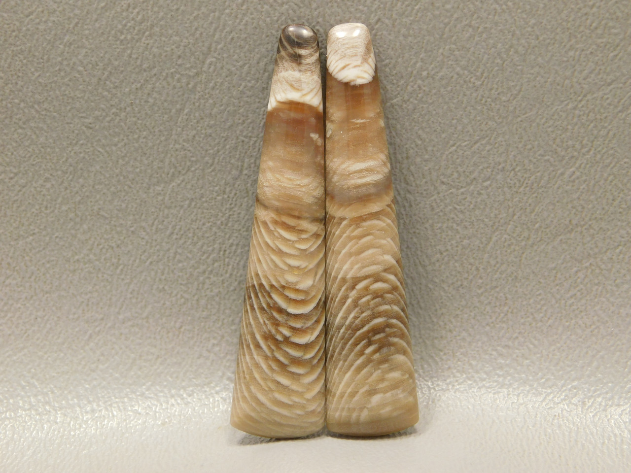 Petrified Wood Sycamore Matched Pair Long Thin Cabochon Stones #16