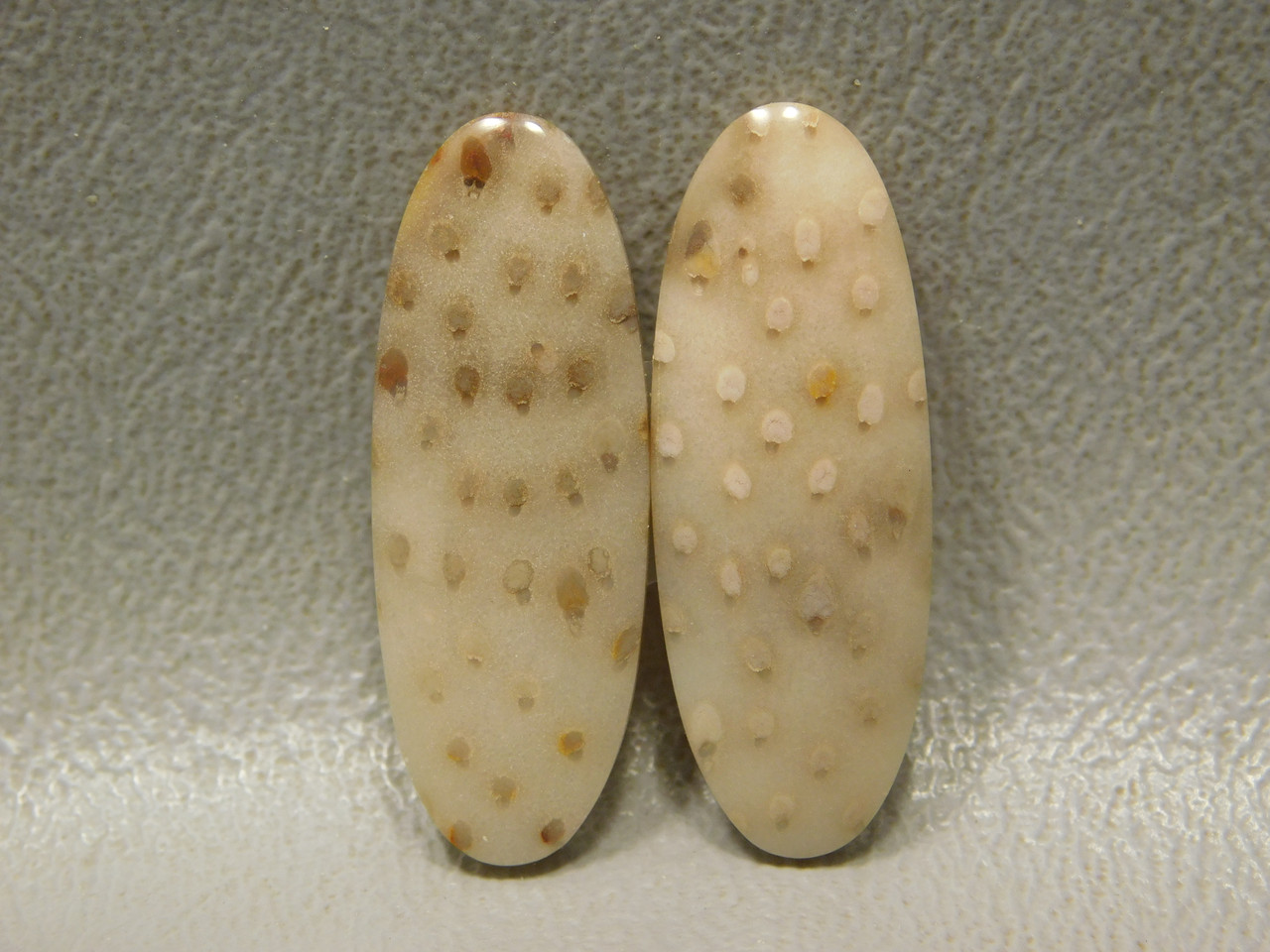 Fossilized Palm Wood Matched Pairs Cabochons Stones #9