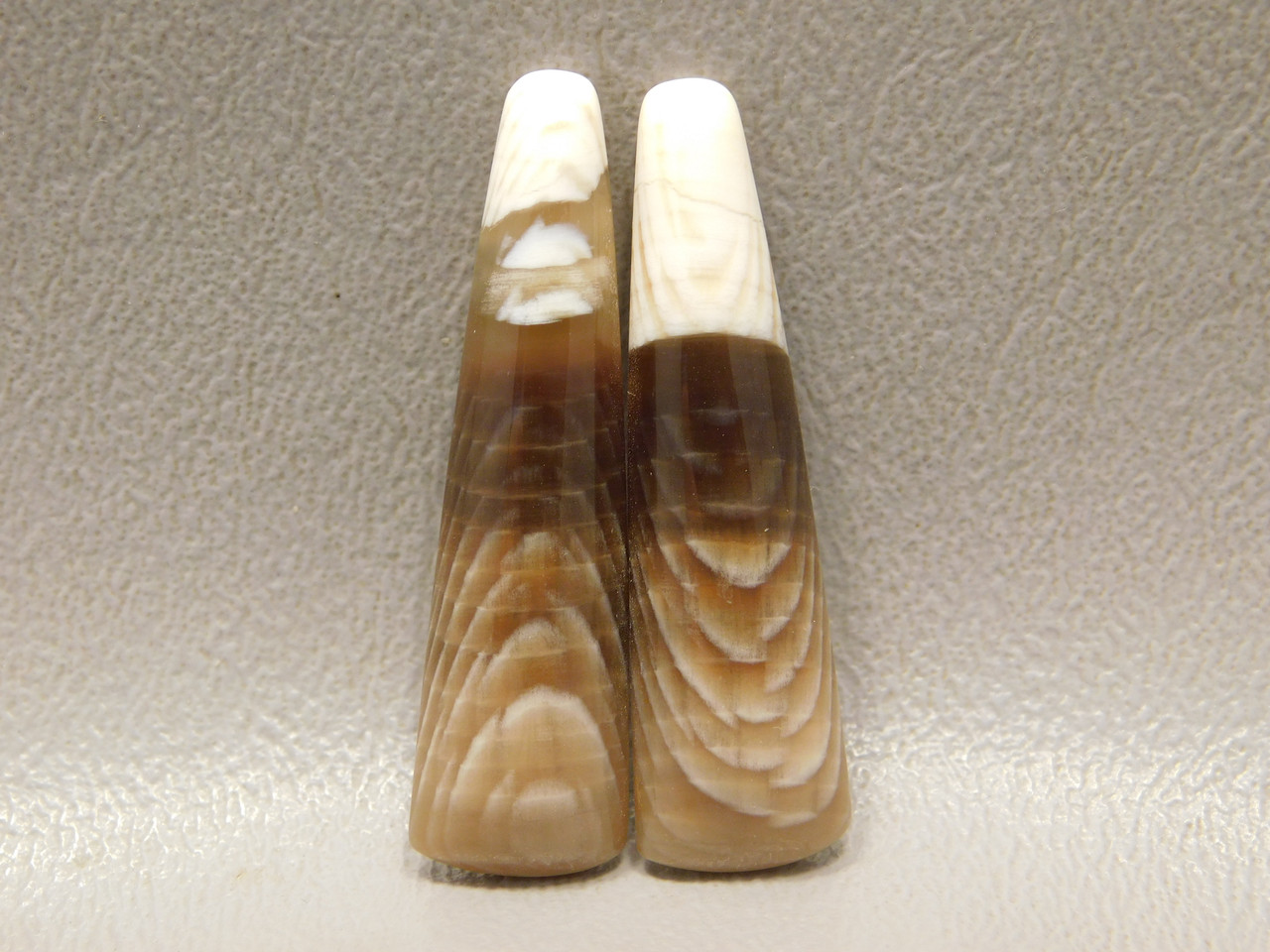 Petrified Sycamore Matched Pair Cabochons Badger Pocket Fossil Wood #18