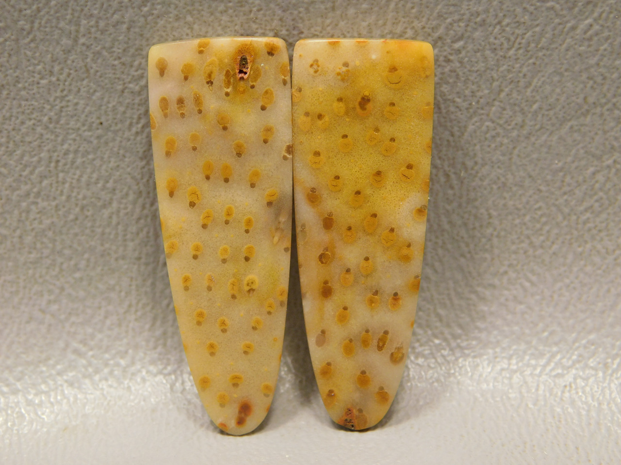 Fossilized Wood Louisiana Palm Tongues Stones Cabochons #24
