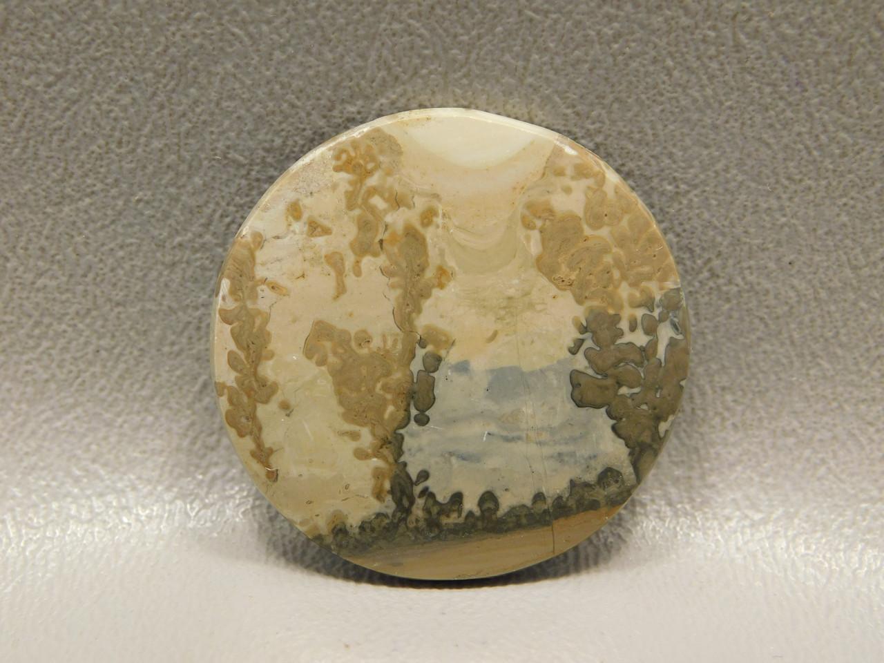 Cotham Marble Fossil Stone Cabochon 33 mm Round Gemstone #5
