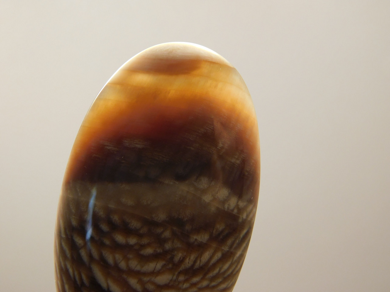 Fossil Wood Oval Cabochons for Jewelry Making Supplies #11