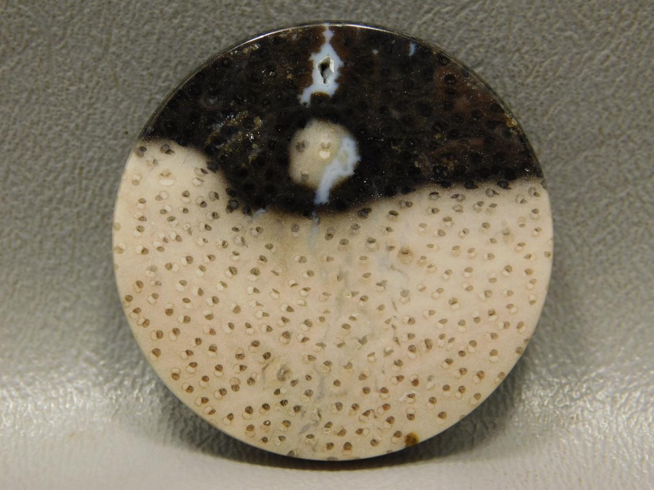 Petrified Palm Wood 39 mm round Black Beige Dots Cabochon #9