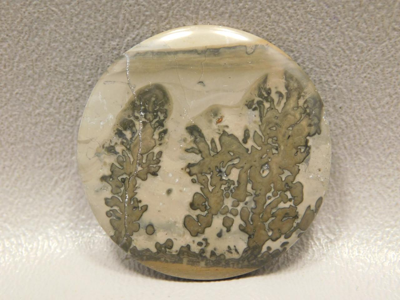 Cotham Marble Fossil Stone Cabochon Jewelry Designer Gemstone #8