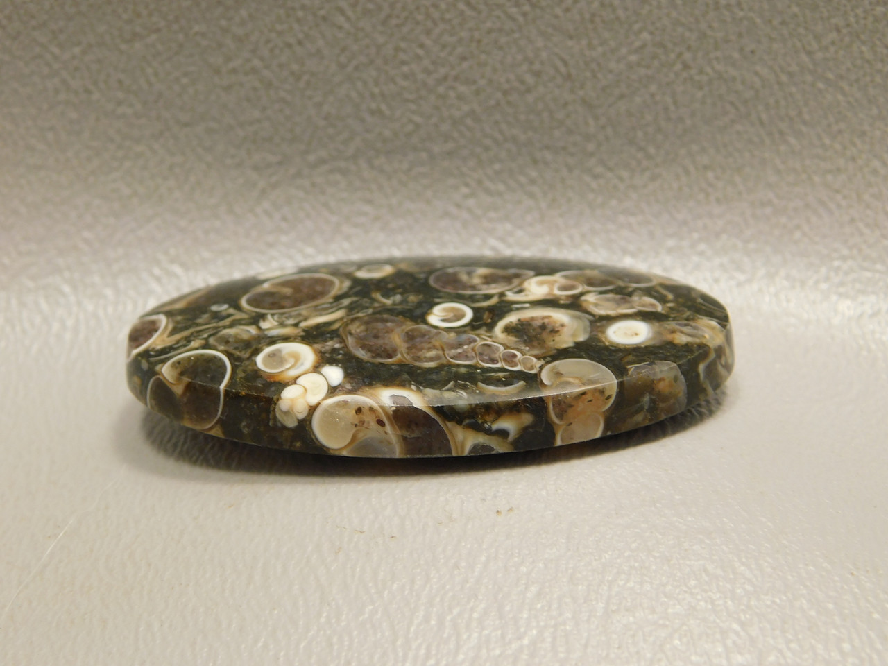 Turritella Agate Semiprecious Gemstone Natural Fossil Cabochon #18