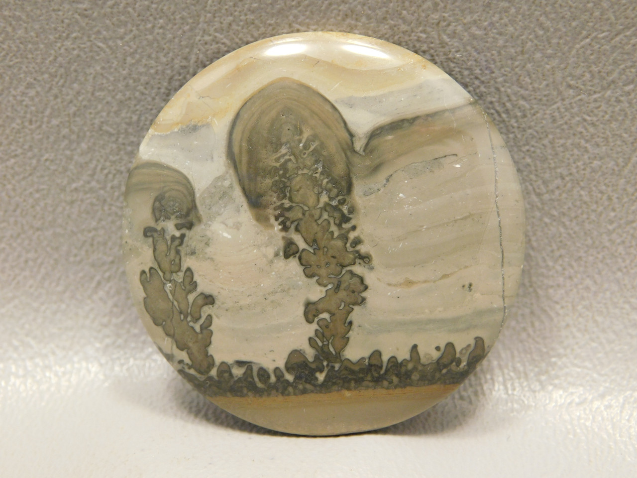 Cotham Marble Fossil Stone Cabochon Designer Gemstone #4