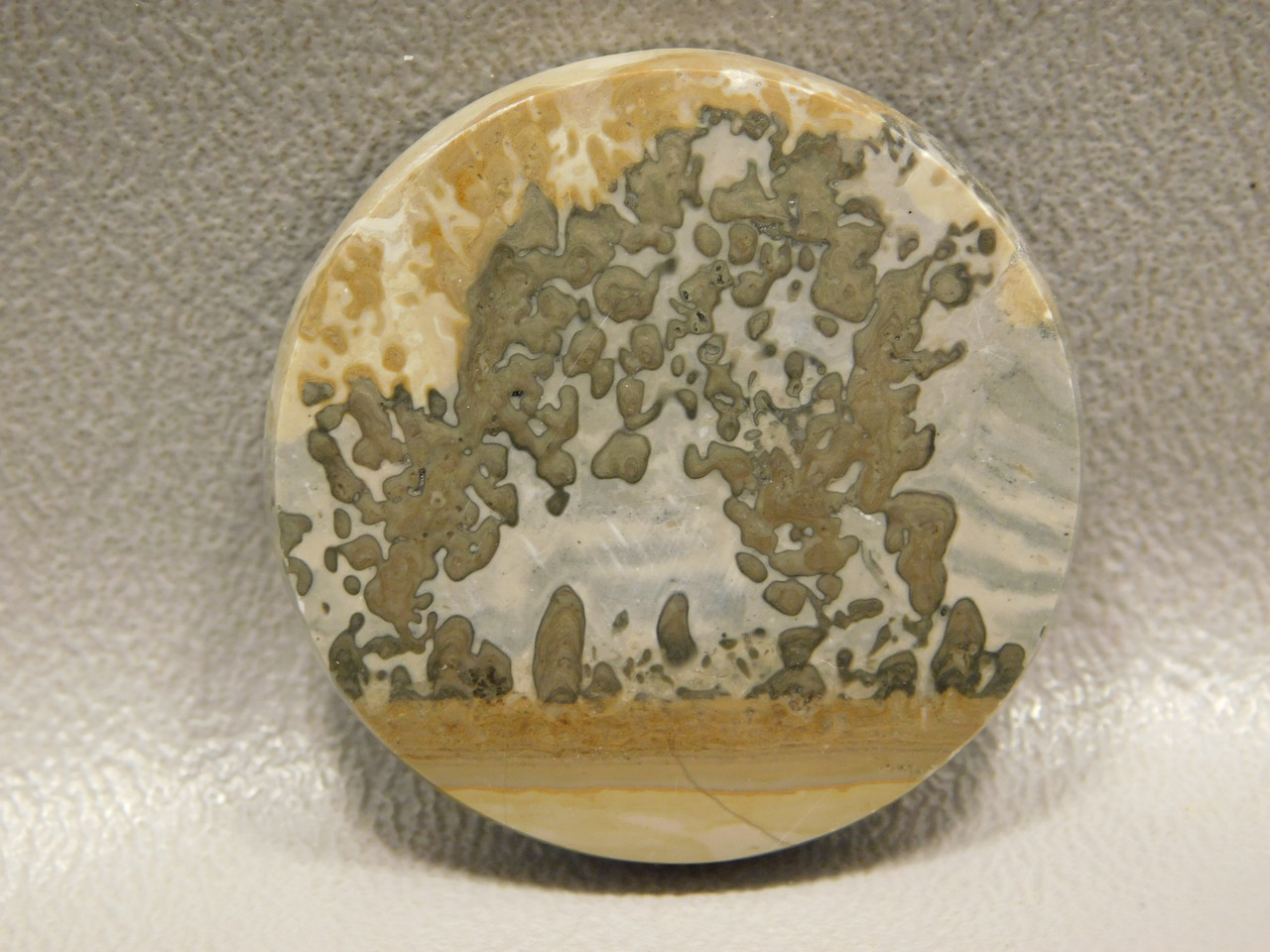 Cotham Marble Fossil Stromatolite Stone Cabochon 33 mm Round #13