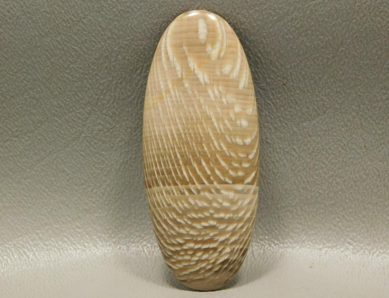Petrified Wood Badger Creek Sycamore Large Stone Cabochon #3