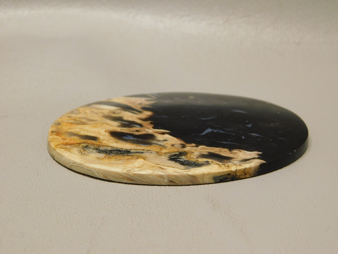 Petrified Palm Wood Large Natural Stone Cabochon Collector #13