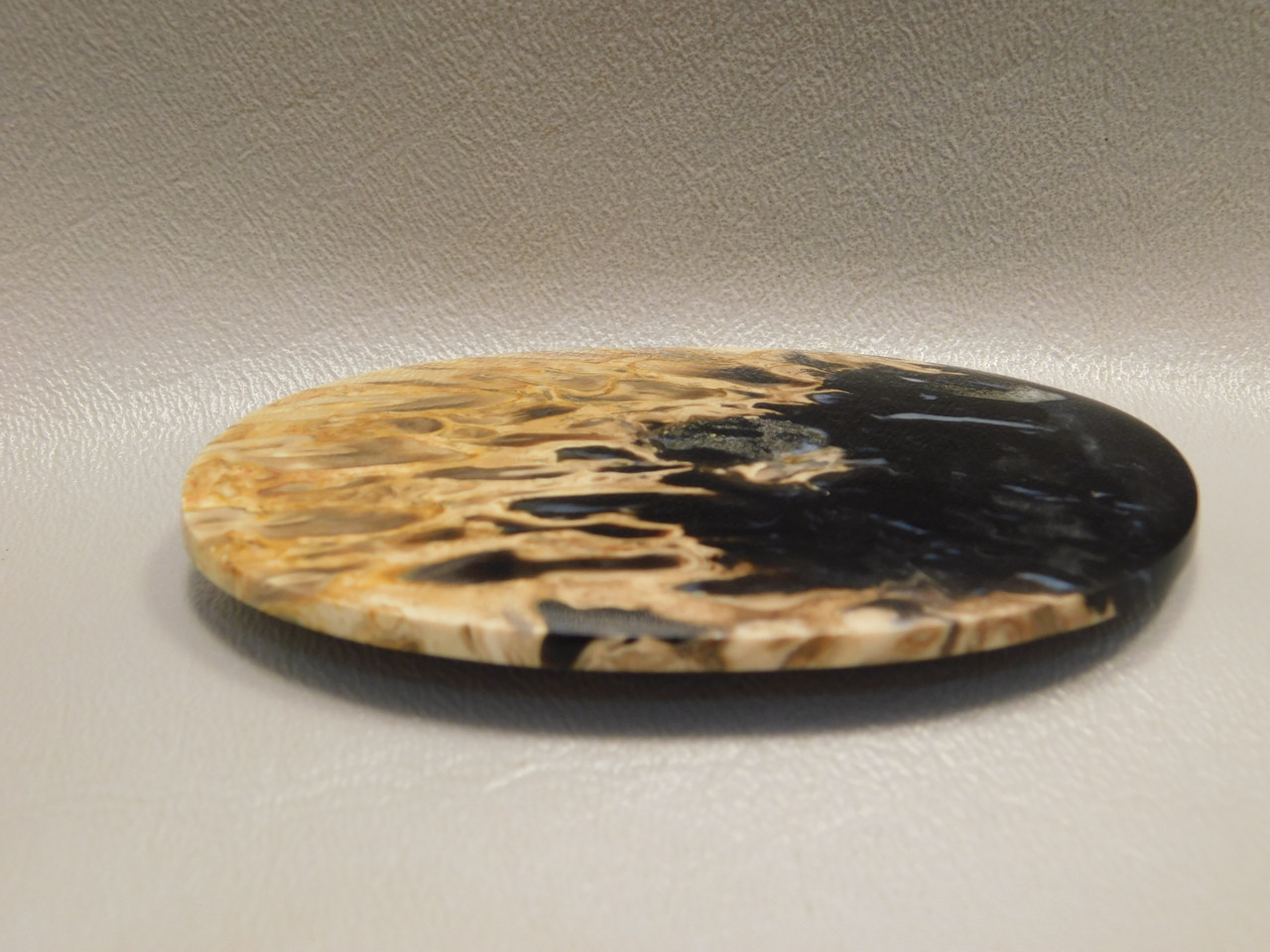 Petrified Palm Wood Large Designer Stone Cabochon Collector #11
