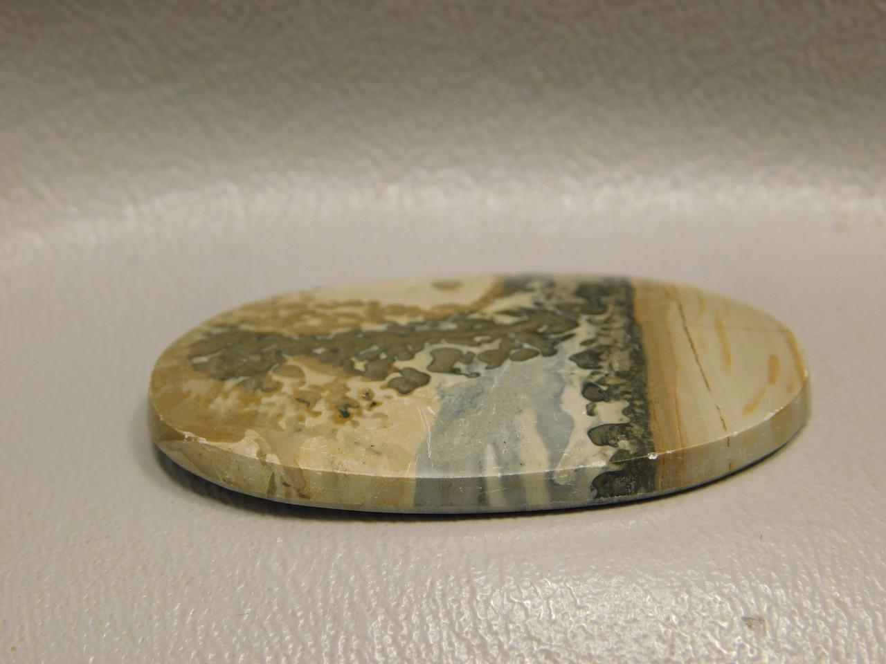 Cotham Marble Fossil Stromatolite Stone Cabochon England #12