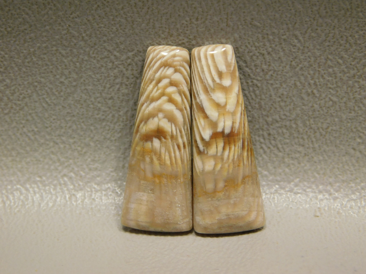 Fossilized Sycamore Wood Matched Pairs Cabochons Badger Creek #17