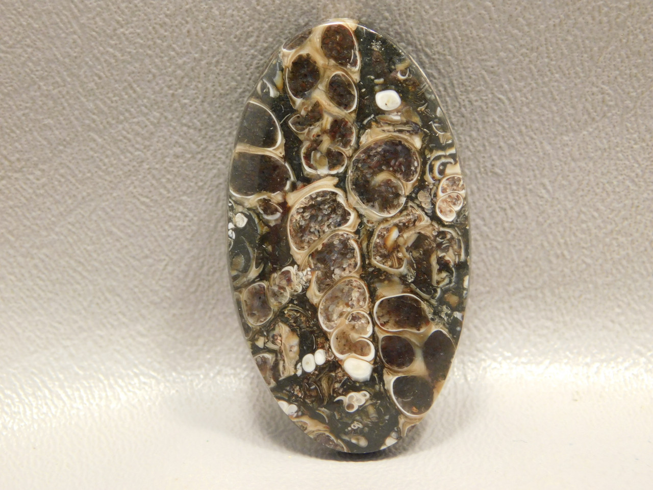 Turritella Agate Stone Natural Fossil Cabochon Wyoming #10