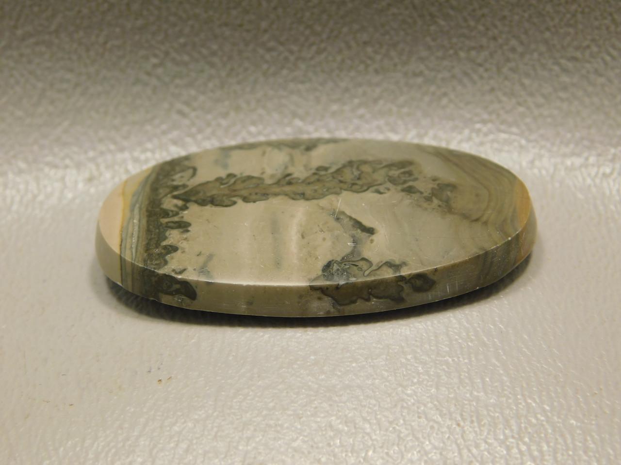 Cotham Marble Fossil Stromatolite Stone Cabochon England #11