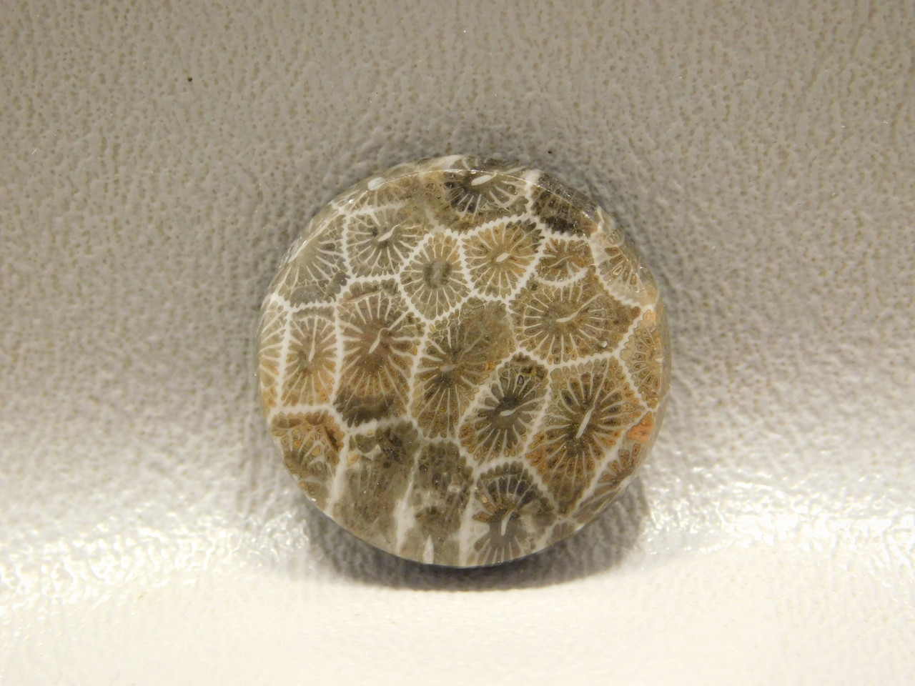 Flower Jasper Cabochon Fossil Loose Stones 22 mm Round #f2
