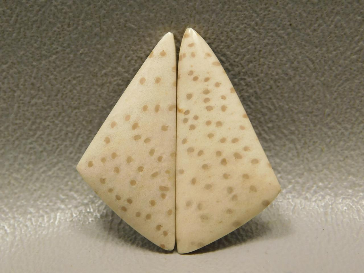 Fossil Palm Wood Matched Pairs Polka Dot Tan Cabochons #7