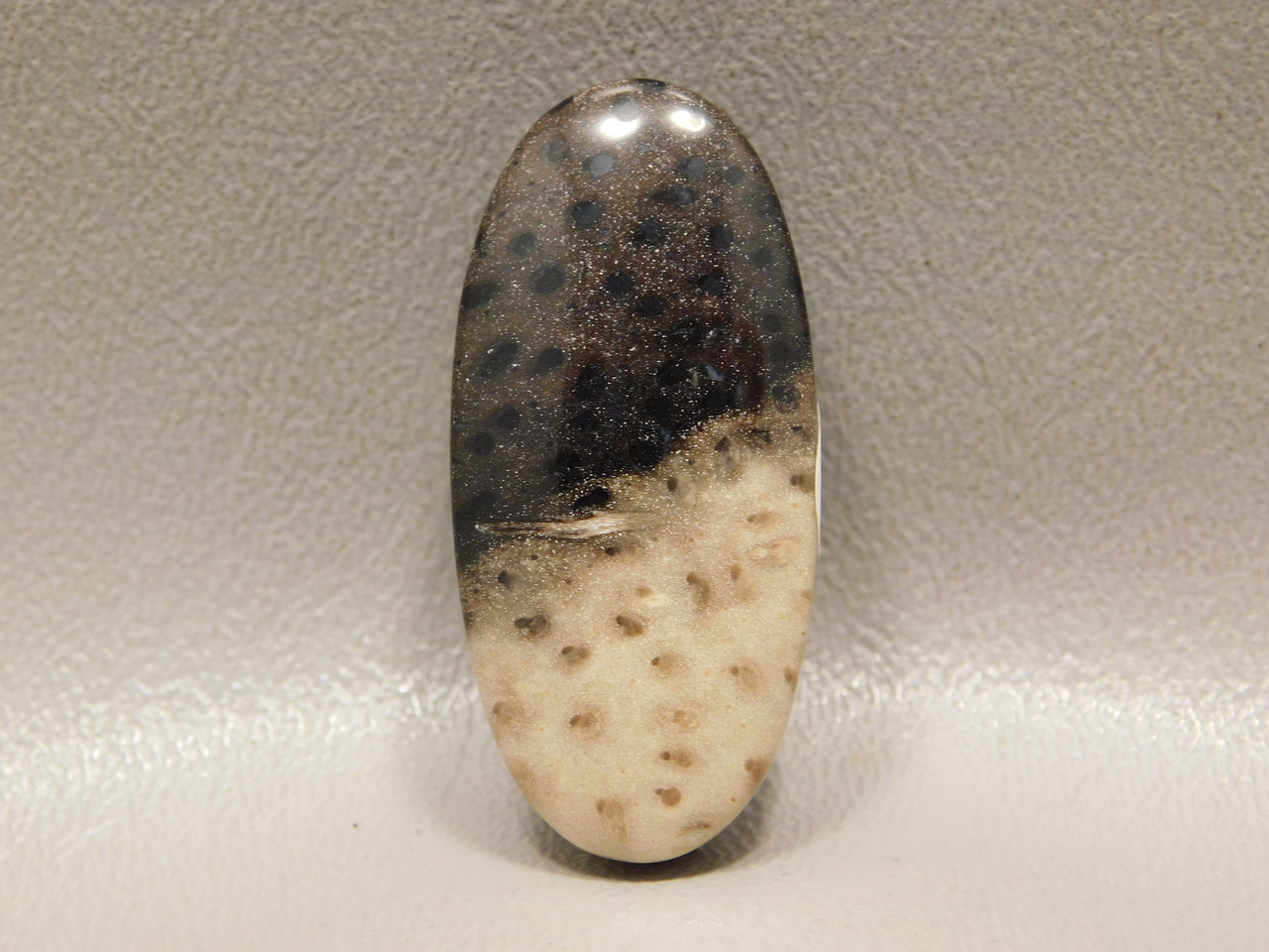 Fossilized Palm Wood Polka Dot Side Drilled Stone Bead Pendant #7