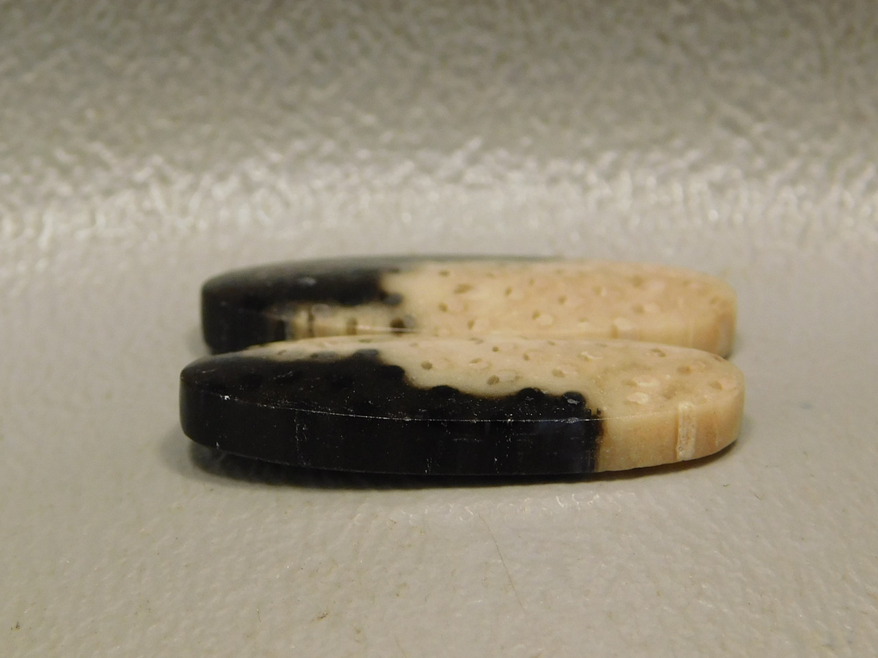 Petrified Palm Wood Louisiana Earring Matched Pair Ovals Cabochons #22