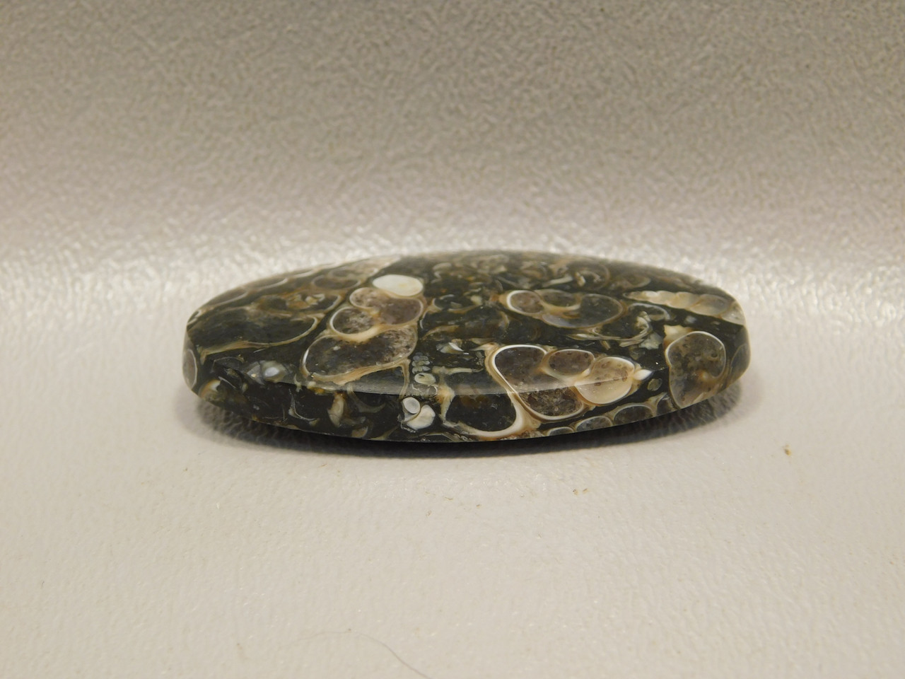 Turritella Agate Wyoming Gemstone Fossil Cabochon #2