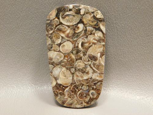 Turritella Agate Loose Stone for Jewelry Fossil Cabochon #4
