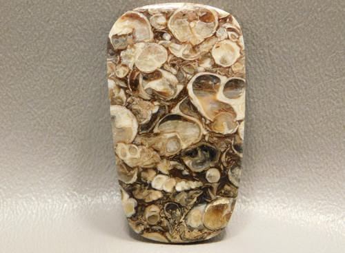 Agatized Turritella Cabochon Stone Fossil Jewelry Making #6