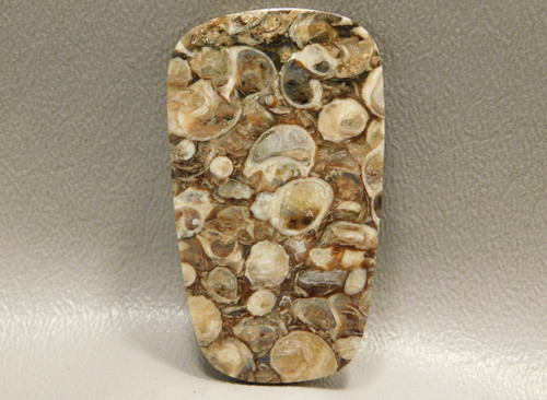Turritella Agate Large Ladder Shaped Stone Fossil Cabochon #8