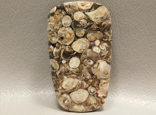 Turritella Agate Cabochon Wyoming Fossil #11