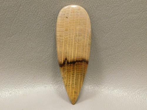 Petrified Golden Oak Wood Cabochon Semi Precious Stone #1