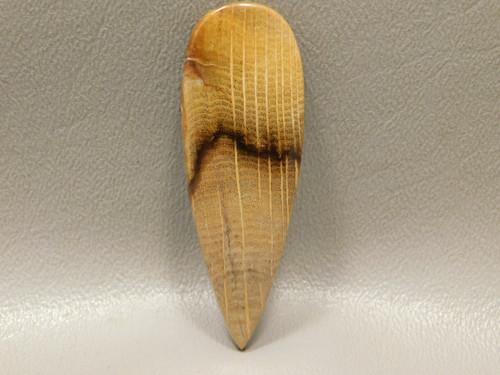 Petrified Golden Oak Fossil Wood Cabochon Gemstone #6