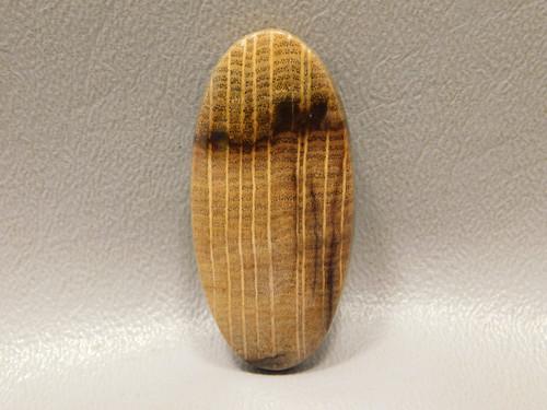 Stinking Water Petrified Golden Oak Wood Cabochon Stone #7