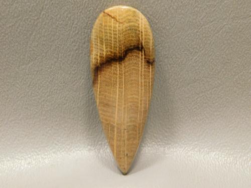 Petrified Golden Oak Wood Cabochon Semi Precious Gemstone #18