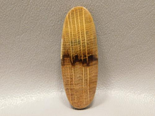 Petrified Golden Oak Wood Cabochon Fossil Loose Stone #10