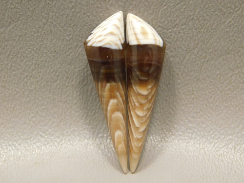Petrified Sycamore Wood Matched Pairs Triangles Cabochons Stones #2