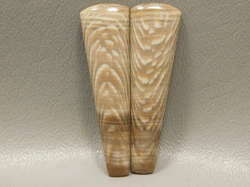 Petrified Sycamore Wood Matched Pair Cabochons Gemstone Natural Stone #6