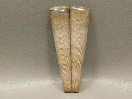 Petrified Wood Matched Pair Wholesale Cabochons Semi Precious Stone #13