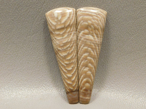 Petrified Sycamore Wood  Cabochons Matched Pair for Earrings #12